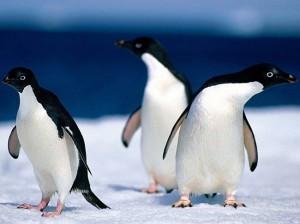 changement d'algorithme : Google Pingouin