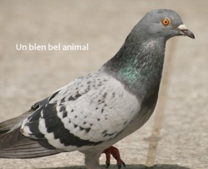 Pigeon l'animal de Google