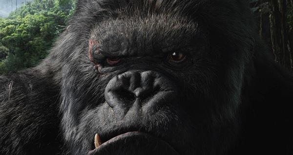 Le King et le Kong : la certification CESEO