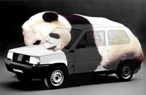 """L'origine du nom """"Panda"""""""