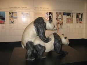 Un panda heureux
